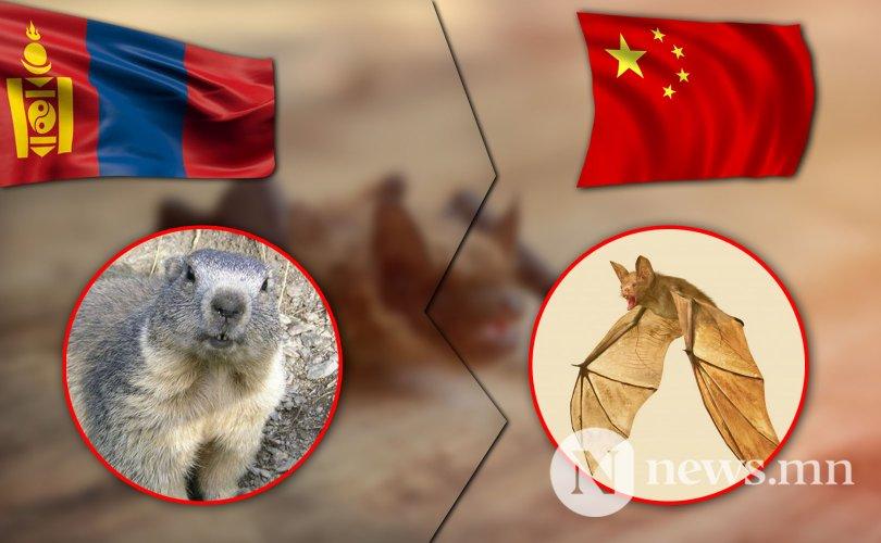 Ухань хотын гашуун түүхийг монголчууд давтах вий!!!