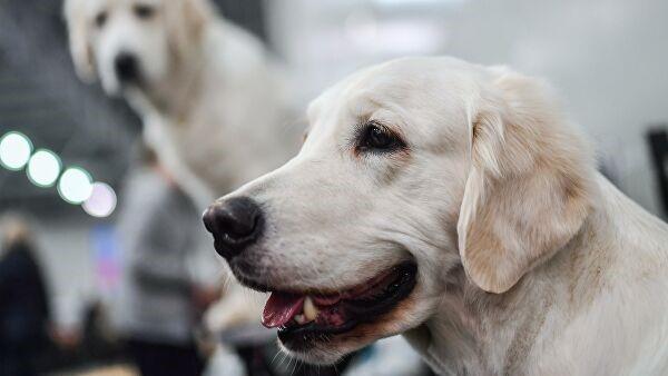 Цуврал киноны баатруудын нэрийг нохойдоо өгөх нь элбэг байдаг гэнэ