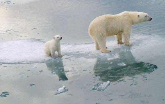 Цаг уурын өөрчлөлт: 2100 он гэхэд цагаан баавгайг дахин олж харахгүй