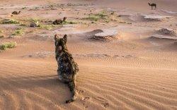 Нүүдэлчид мянган жилийн өмнөөс муур тэжээсэн байж магадгүй