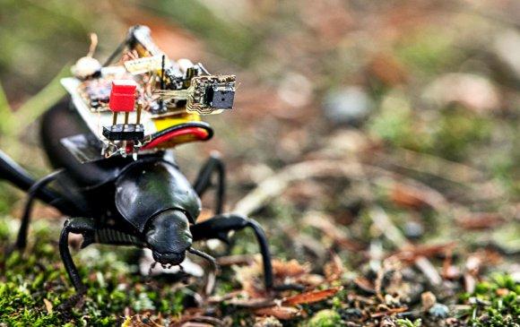 Цох хорхойн нуруунд зүүх боломжтой камер бүтээжээ