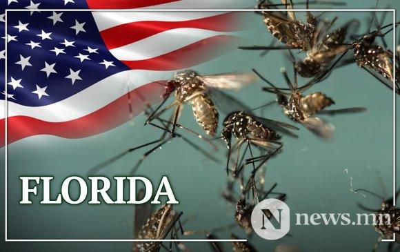 Флорида: Генийн өөрчлөлттэй 750 сая эр шумуулыг байгальд тавина
