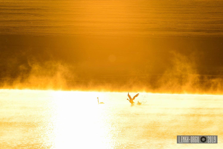 Фото цомог шувууд (2 of 4)