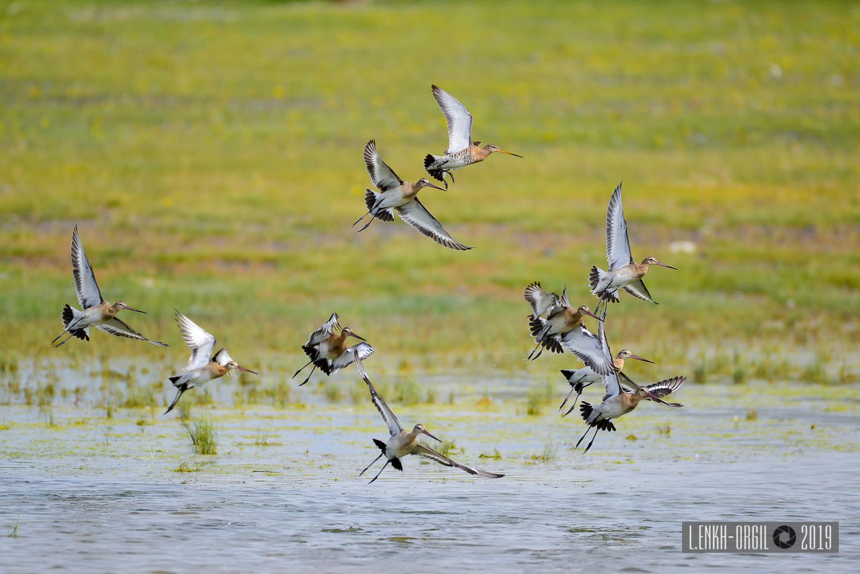 Фото цомог шувууд (7 of 1)