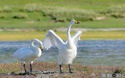 ФОТО: Монгол орны үзэсгэлэнт шувууд