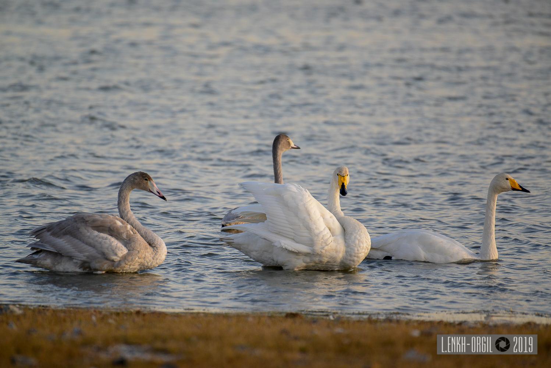 Фото цомог шувууд (8 of 4)