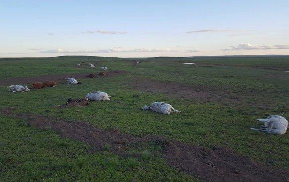 Дорноговь аймагт үер бууж, 19 өрхийн олон тооны мал энджээ