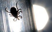 БНХАУ-д хачгаар дамждаг аюултай вирус дэгдэж 7 хүн нас барлаа