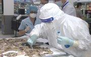Хятадад хөлдөөсөн далайн хүнснээс коронавирус илэрчээ