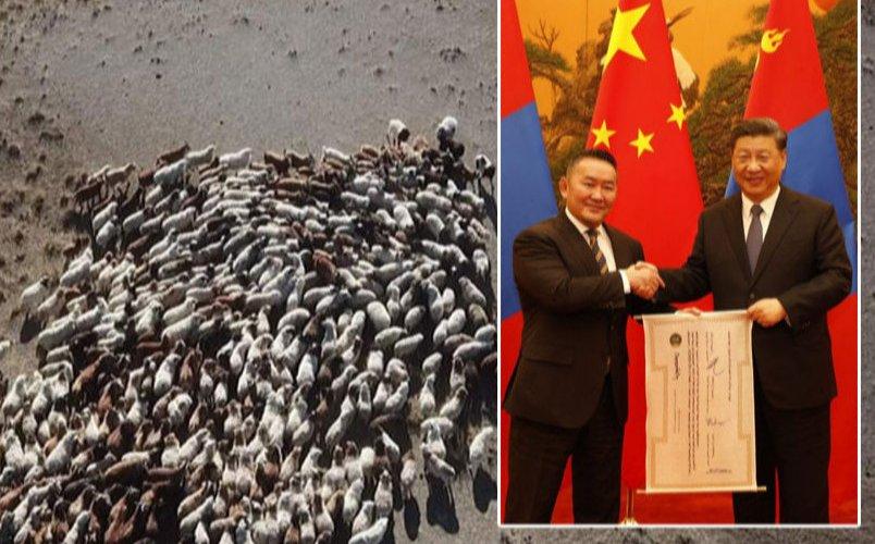 Эхний ээлжийн 15 мянган хонийг ирэх сард хүлээлгэн өгнө