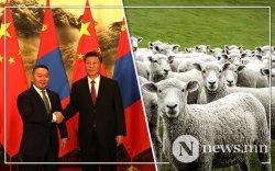 БНХАУ-д өгөх хонийг Хэнтий, Сүхбаатар аймгаас бэлтгэж байна