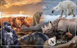 Хүн төрөлхтний буруугаас болж 500 мянган амьтны зүйл устах аюул нүүрлэжээ