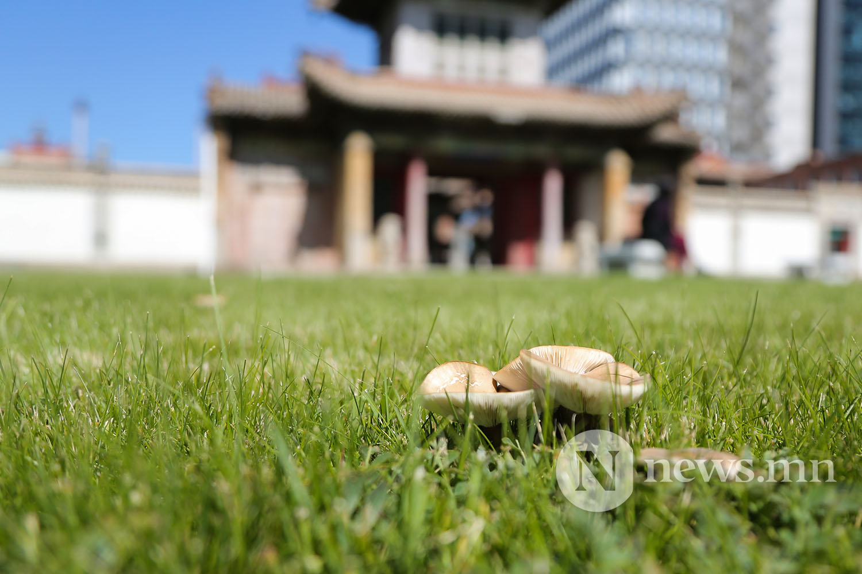 Чойжин ламын сүм музей хурал 16