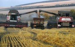 Bloomberg: ОХУ улаанбуудайн үйлдвэрлэлээр дэлхийд ноёлж байна