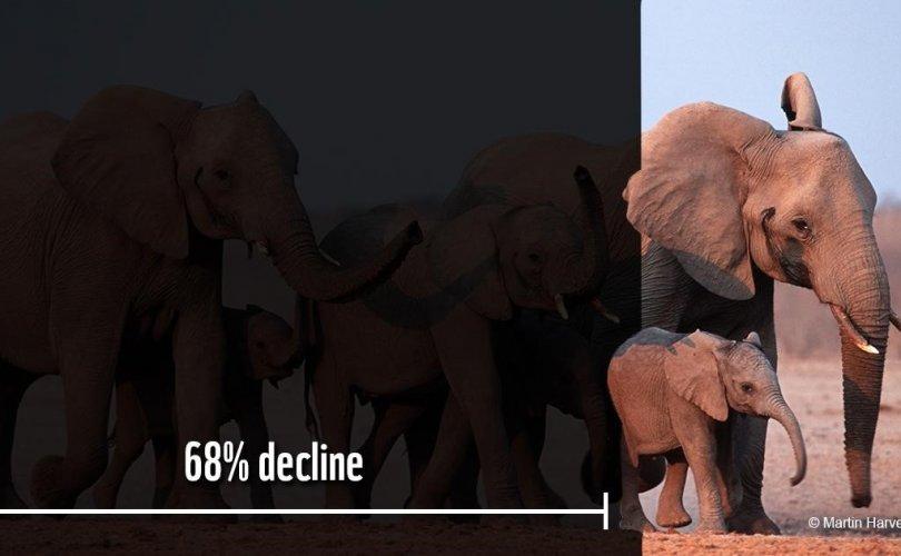 Зэрлэг амьтдын тоо 68 хувиар цөөрчээ