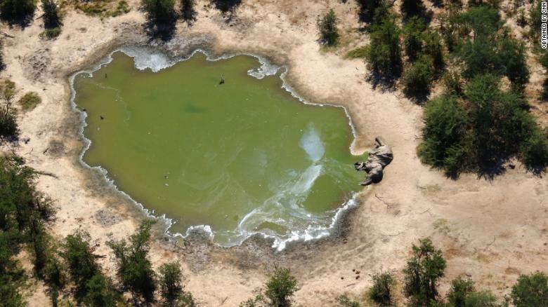 Ботсванад усны бохирдлоос болж, 300 гаруй заан үхжээ