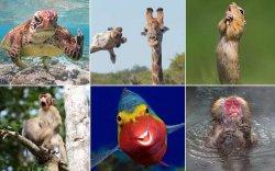 """ФОТО: Зэрлэг ан амьтдын """"Шилдэг комеди"""" гэрэл зургууд"""