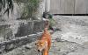 Tiger-Dog-3
