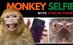 Алга болсон утсаа олтол сармагчин сэлфи хийсэн байжээ