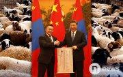 Хятад улс: 20 мянган гаруй хонь айсуй