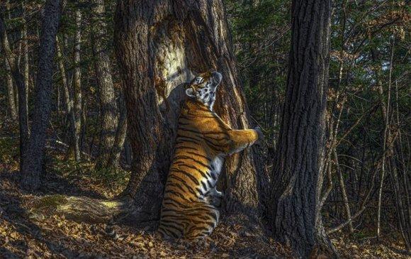 Мод тэвэрч буй бар оны шилдэг байгалийн зургаар тодорлоо