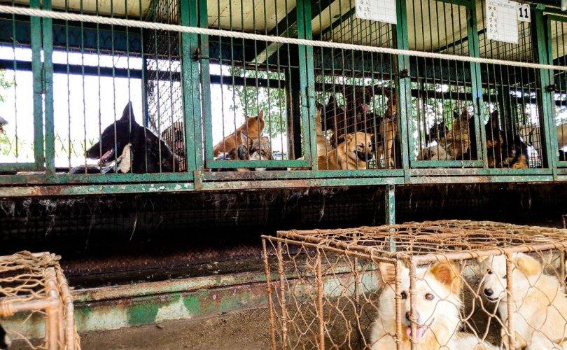 БНСУ: Хүнсэнд хэрэглэхээр 200 гаруй нохой торонд хорьж байжээ