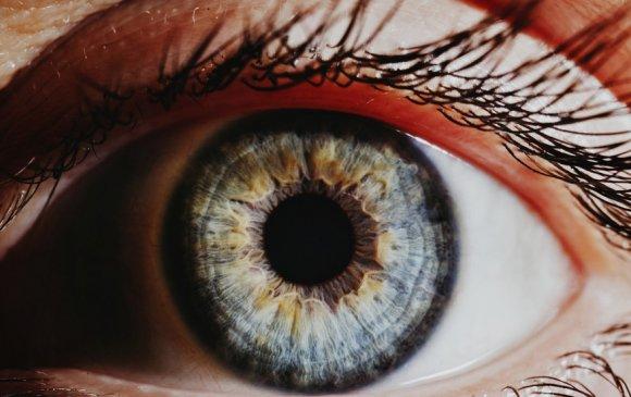 Хүнд нүдээ дахин ургуулах ген байдаг ч хөгжлийн явцад идэвхгүй болжээ