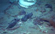 Титаник хөлгийн радио төхөөрөмжийг гарган авахаар төлөвлөжээ