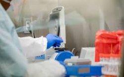 Коронавирусийн аюултай мутацийн эх үүсвэрийг нэрлэв