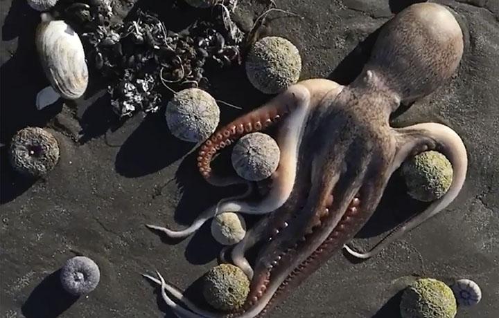 Алс дорнодод далайн олон мянган амьтан эрэг дээр гарч үхжээ