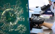 Амьтдын биед хүнд халдах аюултай 850 мянга орчим вирус бий