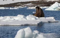 Дэлхийн дулаарал Арктикийн бүс нутагт маш их хохирол учруулна