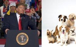 Оросууд нохойндоо Трампын нэрийг өгөх нь ихэсчээ
