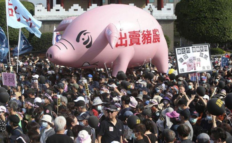 Тайваньчууд АНУ-аас гахайн мах импортлохыг эсэргүүцэв