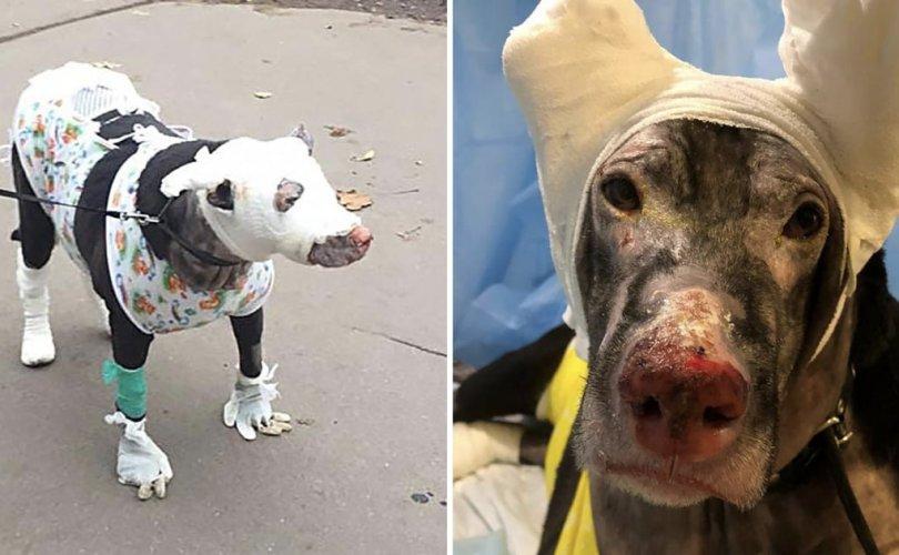 Хээлтэй нохойны ачаар дөрвөн хүн галаас амь аврагджээ