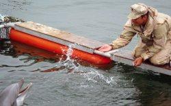 Хойд Солонгос камиказэ далайн гахайнууд бэлтгэж байж болзошгүй