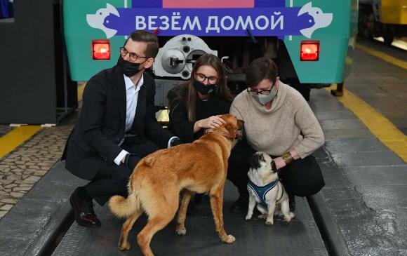 Ид шидийн вагон 200 гаруй нохой, муурыг эзэнтэй болгожээ