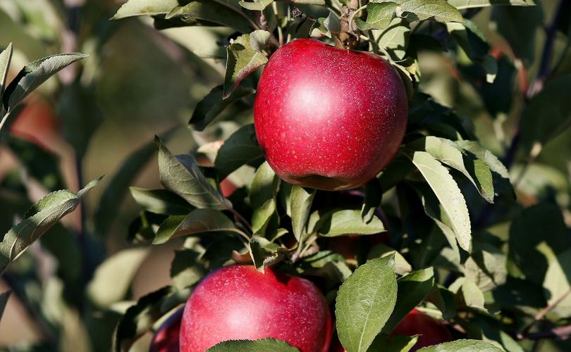 Орос улс Азербайжанаас алим, улаан лооль импортлохыг хориглов