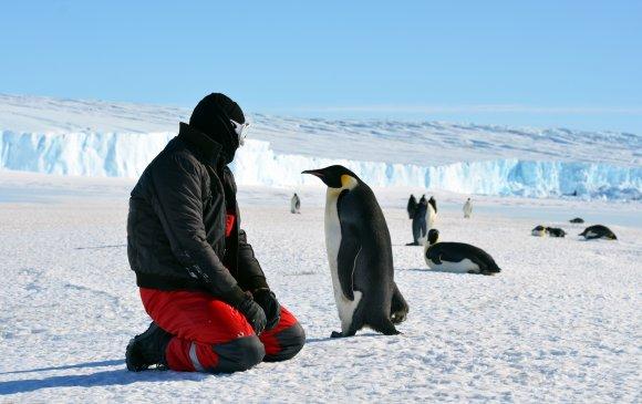 Халдваргүй үлдсэн сүүлчийн тив Антарктидад Сovid-19 бүртгэгдлээ