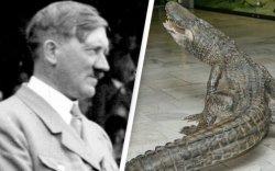 Адольф Гитлерийн тэжээвэр матрыг ОХУ-ын музейд байрлуулжээ