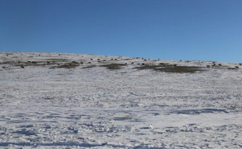 Нийт нутгийн 60 гаруй хувь цасан бүрхүүлтэй байна