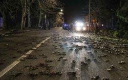 """Италид шинэ жилийн шөнө үхсэн шувуудаар """"бороо"""" оржээ"""