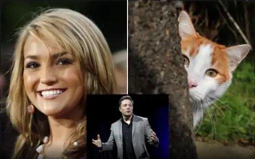 Бритни Спирсийн дүү хоёр муурныхаа үхэлд Илон Маскийг буруутгав