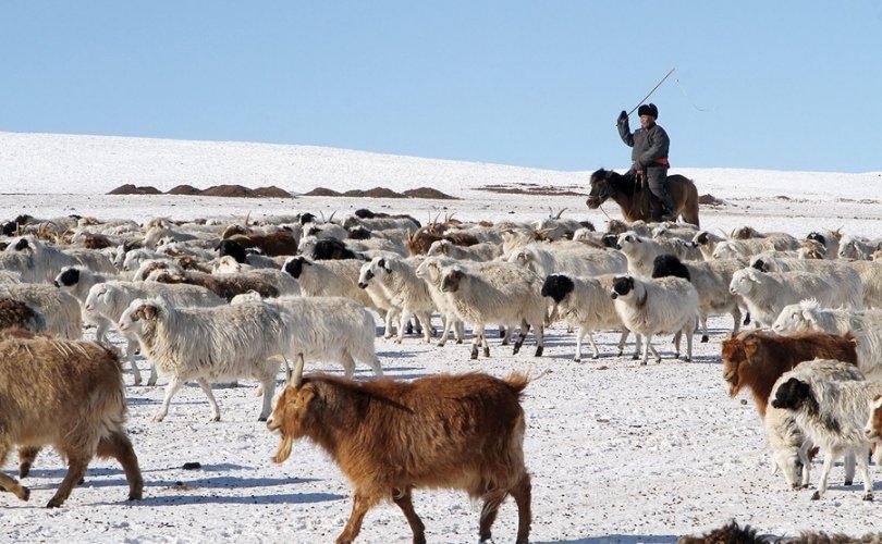 Улсын хэмжээнд оны эхний сард 296.5 мянган мал хорогджээ