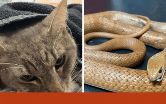Муур бяцхан эздээ хорт могойноос амиараа хамгаалжээ