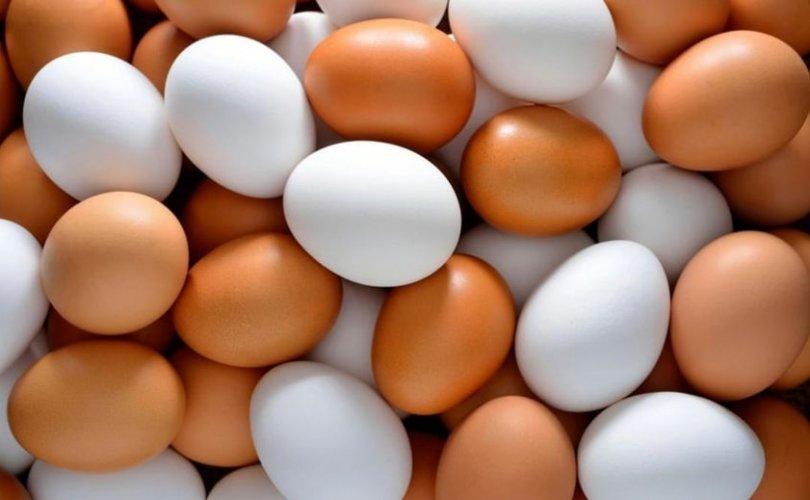 Өнөөдөр худалдаанд 1.300.000 ширхэг өндөг нийлүүлэгдэж байна