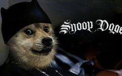 Шинэ криптовалют Dogeсoin шинэ дээд амжилт тогтоолоо