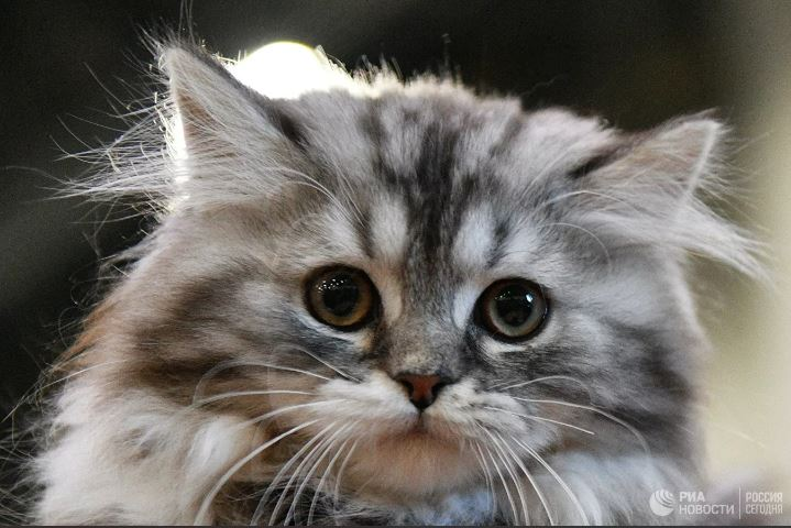 Латвид муур Covid-19-өөр өвчилжээ