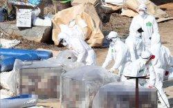 H5N8 вирус хүнд халдсан анхны тохиолдол бүртгэгдэв
