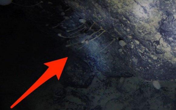 Эрдэмтэд санамсаргүйгээр 1 км зузаан мөсөн доороос амьдрал олжээ